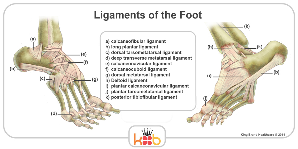 King Brand Foot Ligaments Labelled Diagram Side View