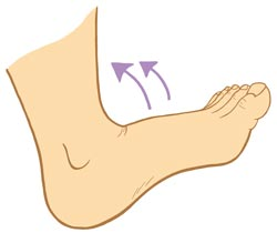 Stretching Dorsiflexion is Bad Diagram