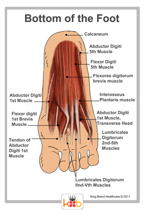 Bottom of foot muscle
